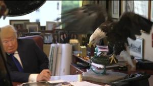 eagle-trump